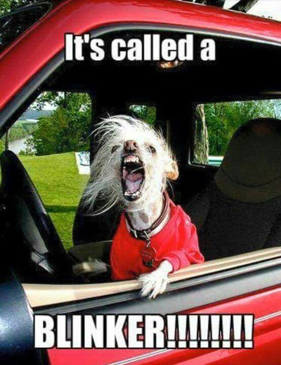 Image result for Angry Driver memes