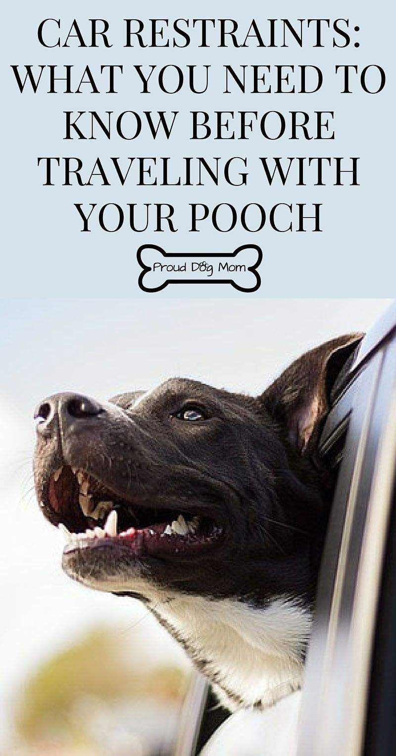 Dog Car Restraints What You Need To Know Before Traveling With Your Pooch With Images Dog Restraint Dog Safe Dog Safety