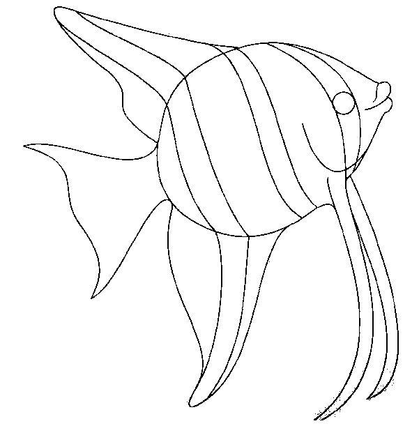 Animais Peixe impressão imagem 5