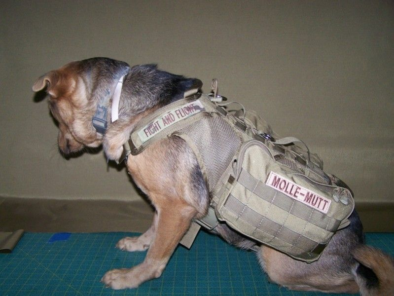TACTICAL ANIMAL! Fight and Flight Tactical's M/L Proioxis Dog ...