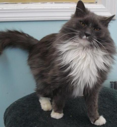 Seniors Need New Homes Too Meet Mortimer At The Bc Spca Vernon Branch Animals Humane Society Spca