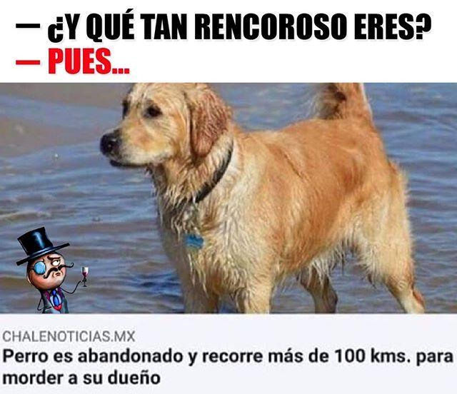 Yo Si Fuera Un Perro Spanglish Memes Memes Best Memes