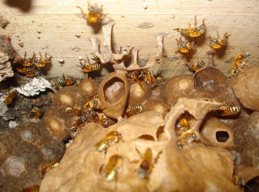 Pin by Loïc Lefebvre on Bio-Mimétisme | Stuffed mushrooms ...