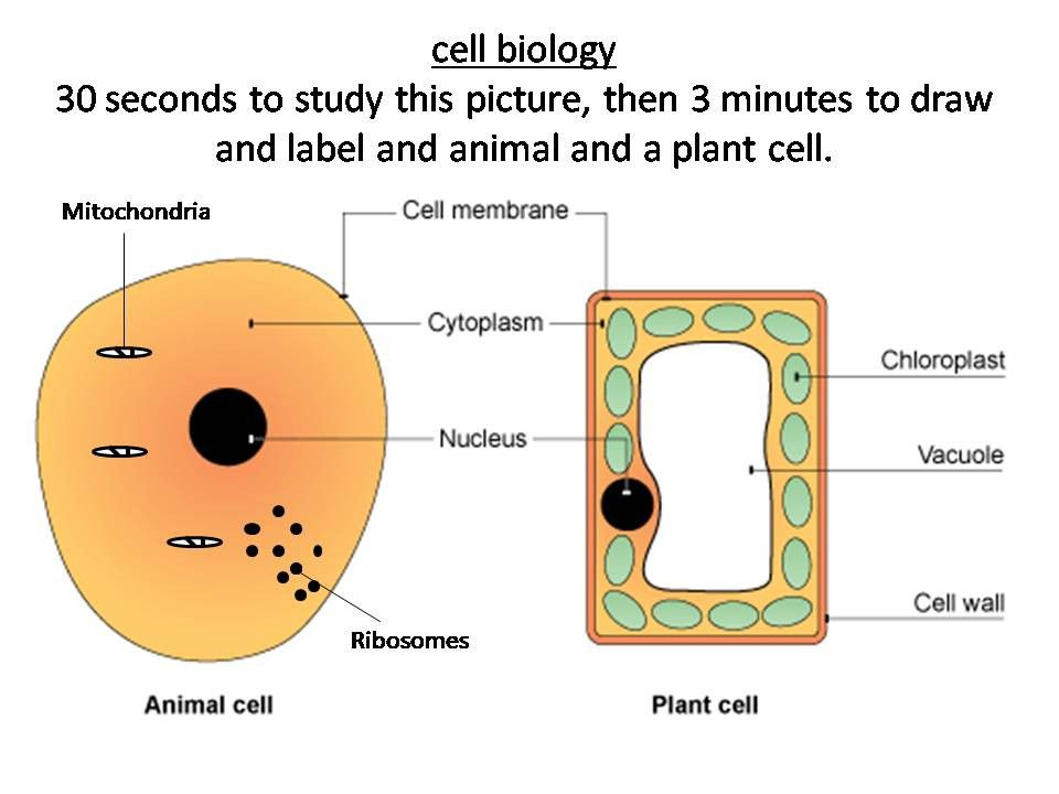 Plant and Animal Cell Diagrams Lovely Plant and Animal ...