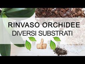 Rinvaso Orchidee   Diversi Substrati : Bark, Mallo Di Cocco E Sfagno