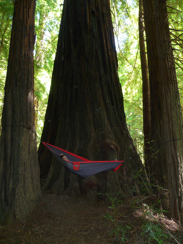 Brendon Boyd - Redwoods State Park, CA