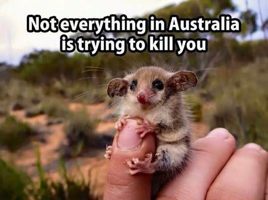 In The Land Of Deadly Creatures http://ibeebz.com