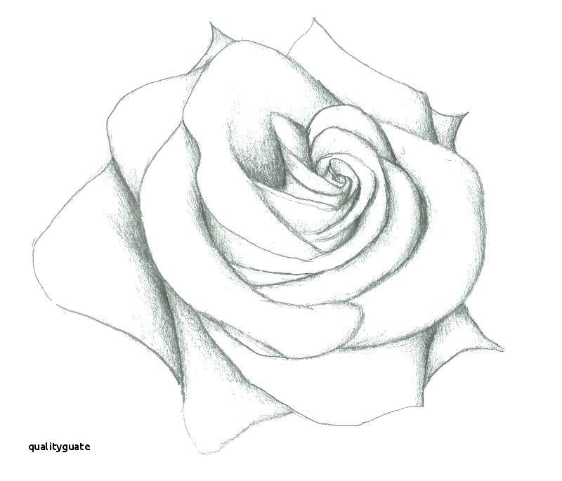 Easy Flower Sketch Easy Flower Sketch Flowers Sketch Beautiful Easy Sketch Flowers Easy Pencil Drawing Rose Model Easy Pencil Flower Pot Easy Pencil Sketch