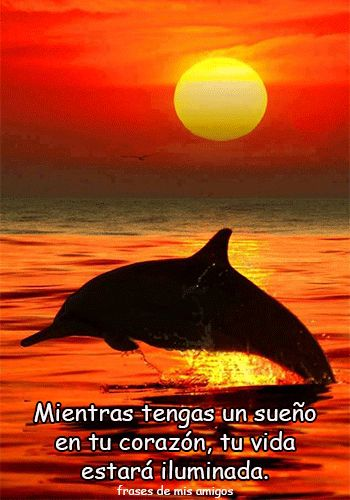Frases Delfin Pinterest Delfines Paisajes Y Atardecer