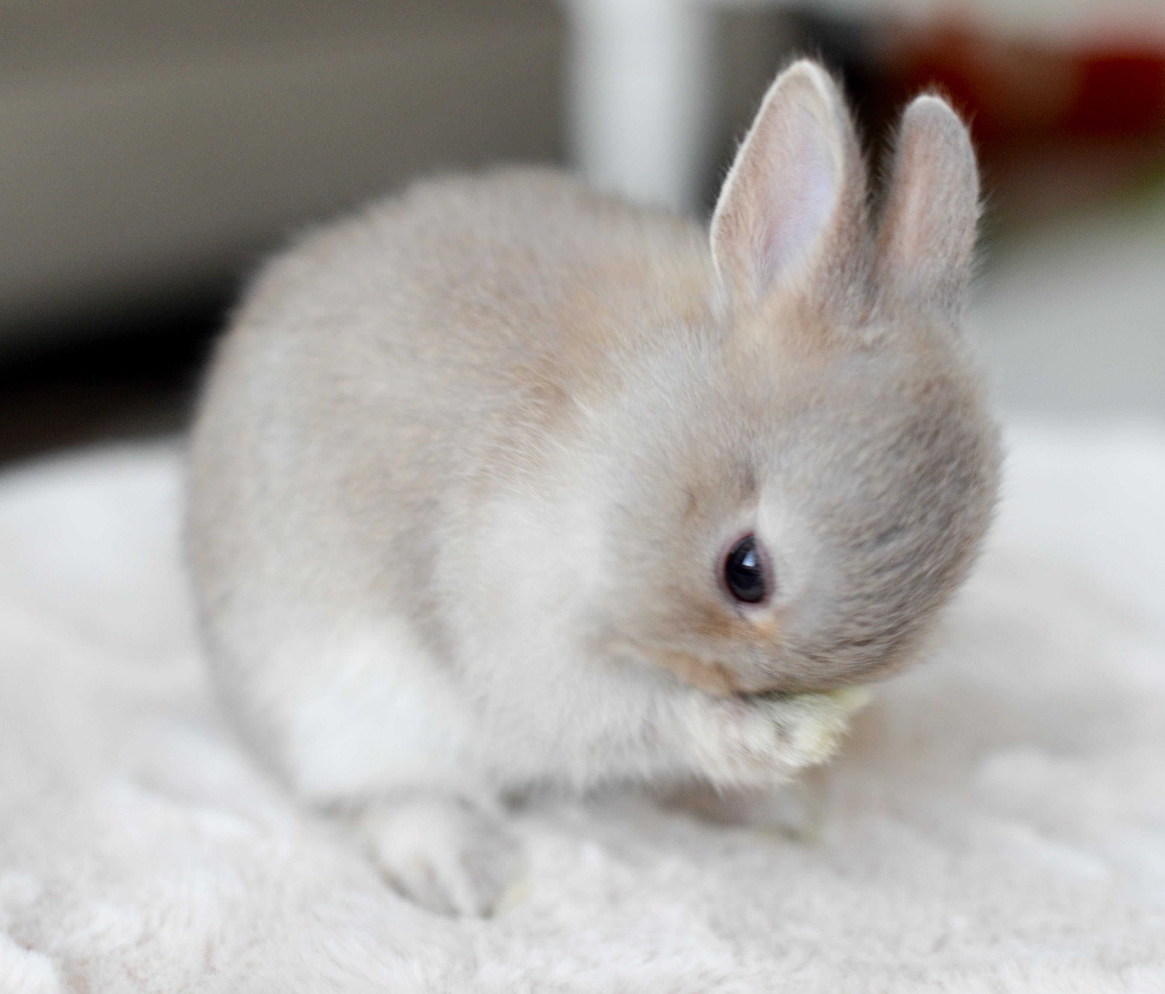 Pin By Tristan Graham On Bunbuns Cute Baby Bunnies Pet Bunny