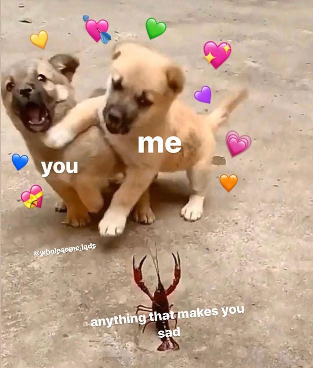 12 5 Ezer Kedveles 79 Hozzaszolas Uwu University Wholesomewhore Instagram Hozzaszolasa Dog Memes Animal Memes Funny Animal Videos