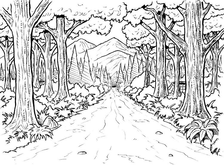 Forest Nature Coloring Pages Enchanted Forest Coloring Book Forest Coloring Pages Enchanted Forest Coloring