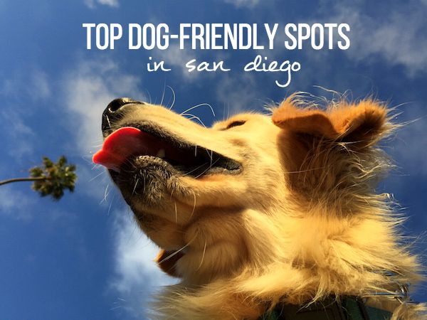 The Top Dog Friendly Spots In San Diego My Socal D Life Dog