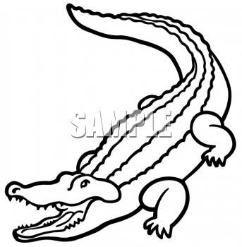 Clipart of an Outline of an Alligator - AnimalClipart. | Summer ...