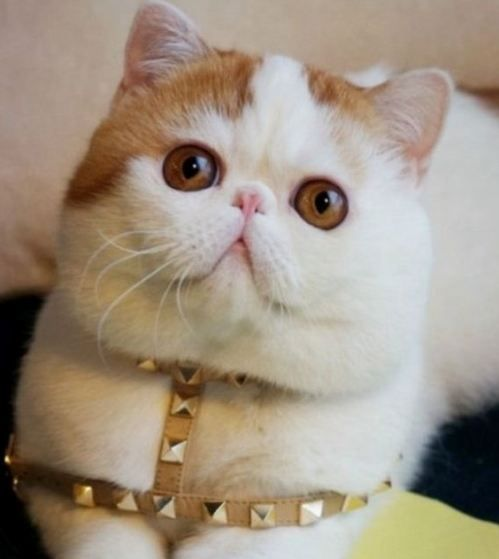 Stylish Cat cat images - 70 fashion & stylish cats! - funnycatsgif