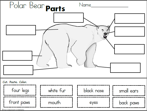 Polar Bear Parts Cut And Paste