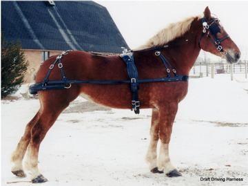draft single driving harness driving pinterest rh pinterest com Horse Pulling Harness Horse and Mule Harness