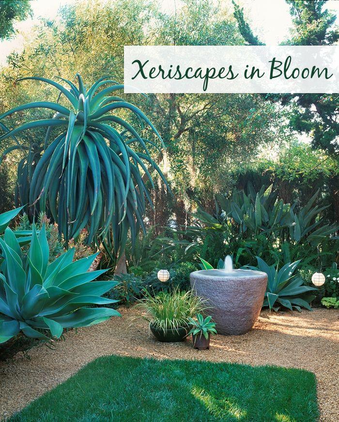 Xeriscape Los Angeles   Google Search. Succulent Garden IdeasFlowers ...