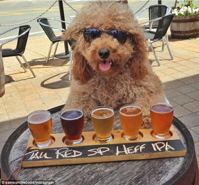 This Insta Famous Goldendoodle Had The Best Summer Holiday