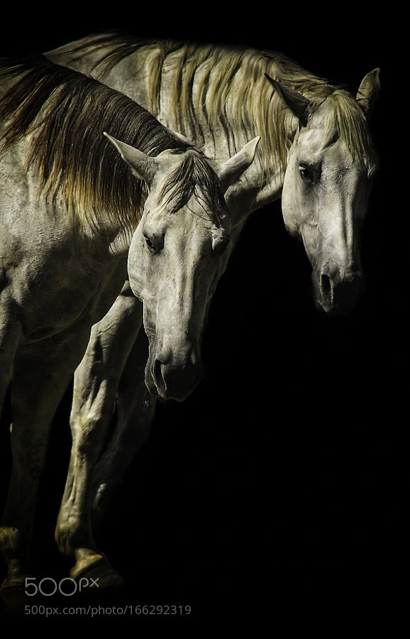 Two Horses by darrylfordphotography via http://ift.tt/2aTfW4T