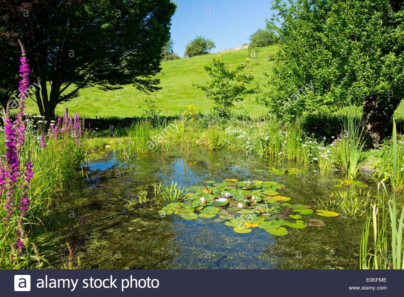 Image Result For Wildlife Ponds Garden Water Features 400 x 300