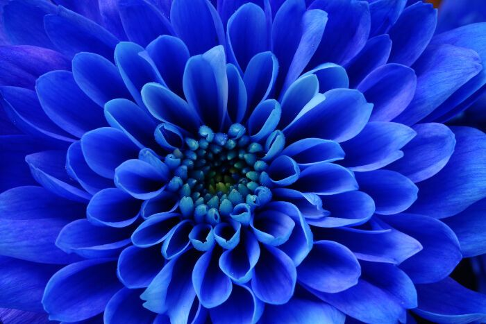 Blue Flowers Meaning Flower Meaning Blue Blueflower Bluenature Types Of Blue Flowers Flower Meanings September Birth Flower