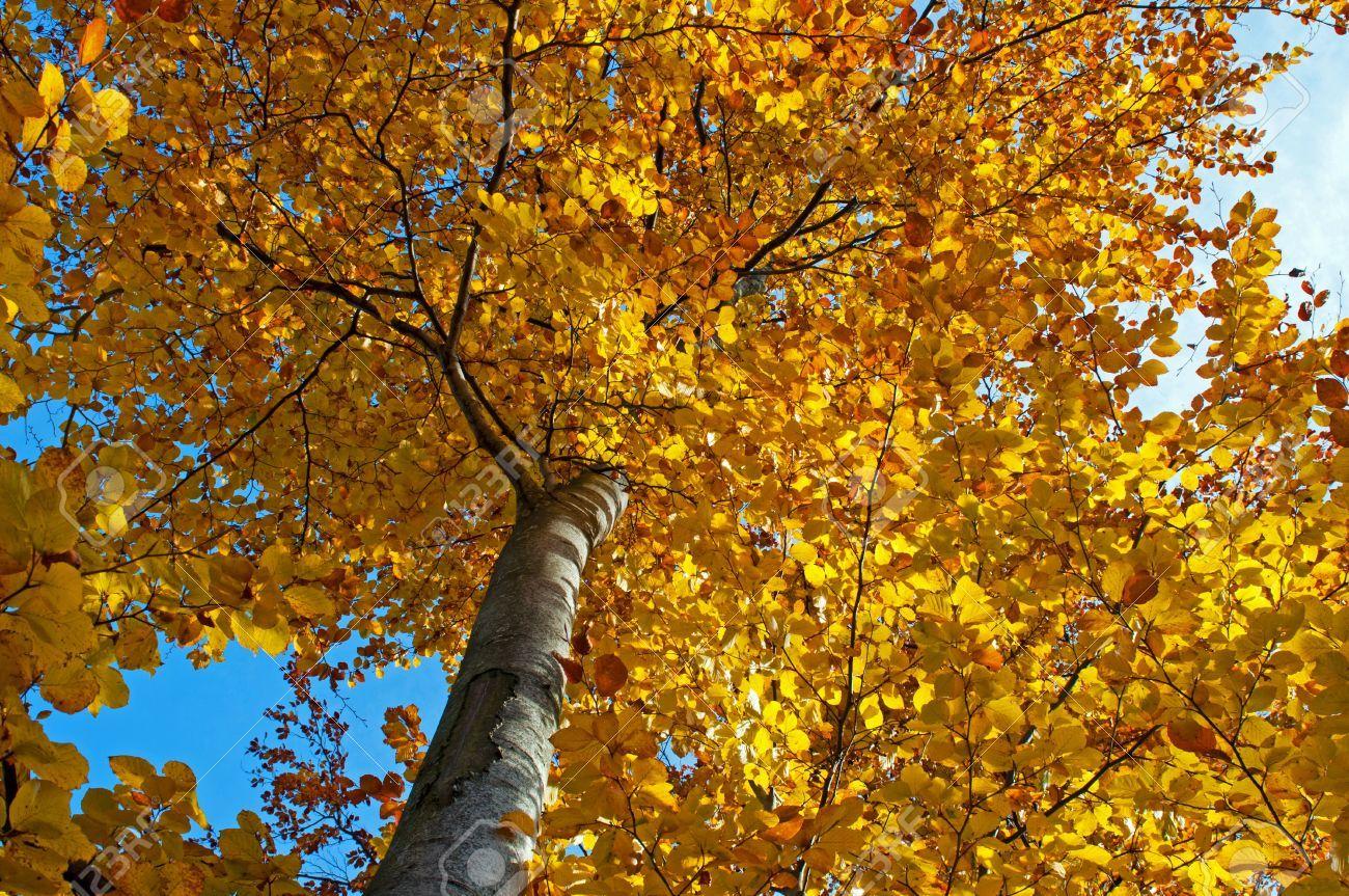 Резултат с изображение за дерево погоды