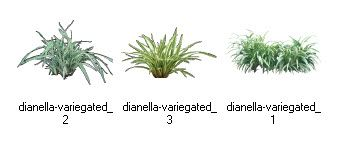 Greenscapes Has Added 3 Dianella Variegated For Clients To Download Must Have User Name And Passwor Landscape Design Software Perennials Landscape Contractor
