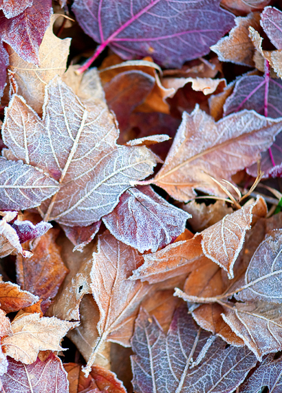 Pin By Sue On Winter Autumn Scenes Leaves Leaf Art