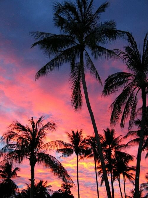 Amazing Beach Sunset Palm Trees