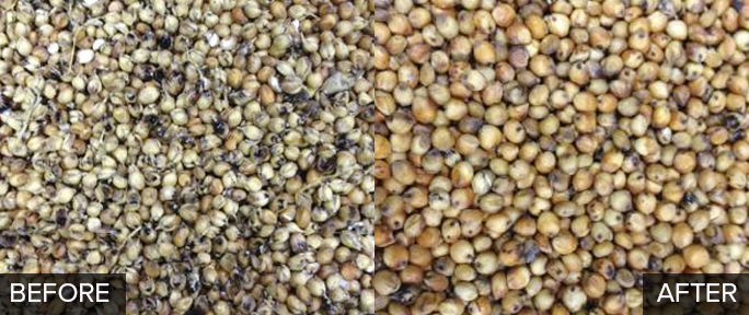 What does Milo seed look like before and after it has been cleaned by a spiral separator?