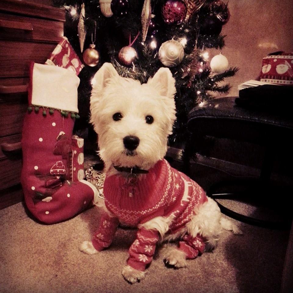 Milo last Christmas :3