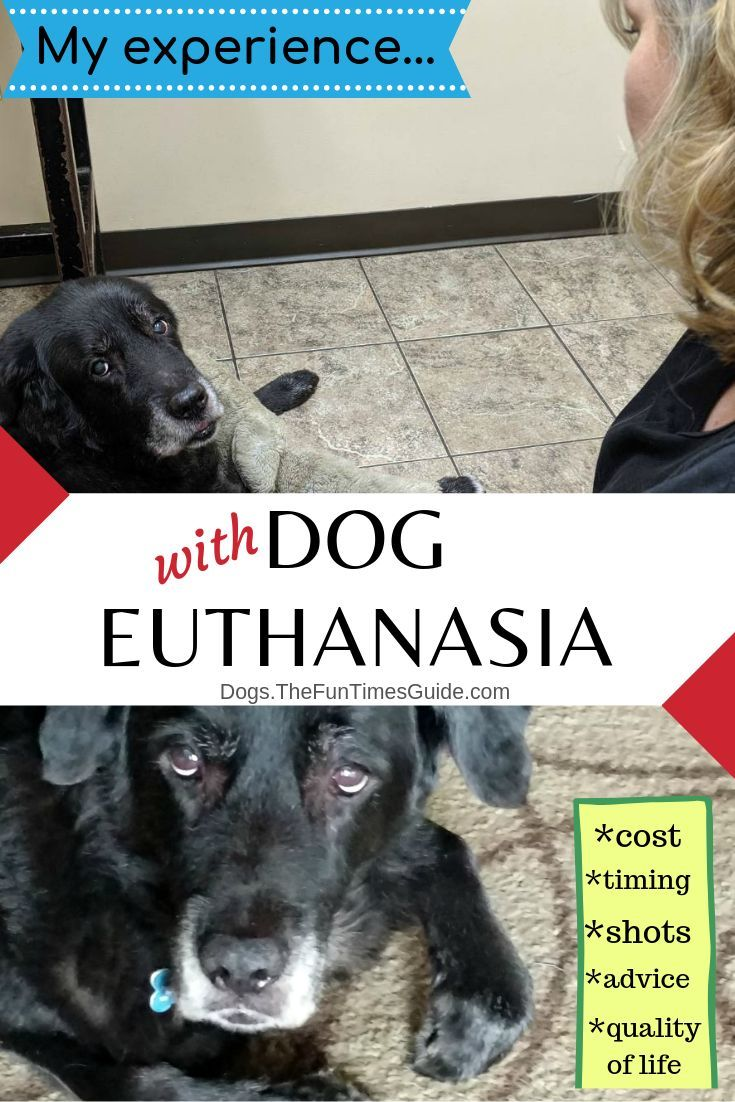 How Do You Know When It S Time To Euthanize Your Dog My Experience Personally And While Working For A Vet Dogs Sick Dog Your Dog