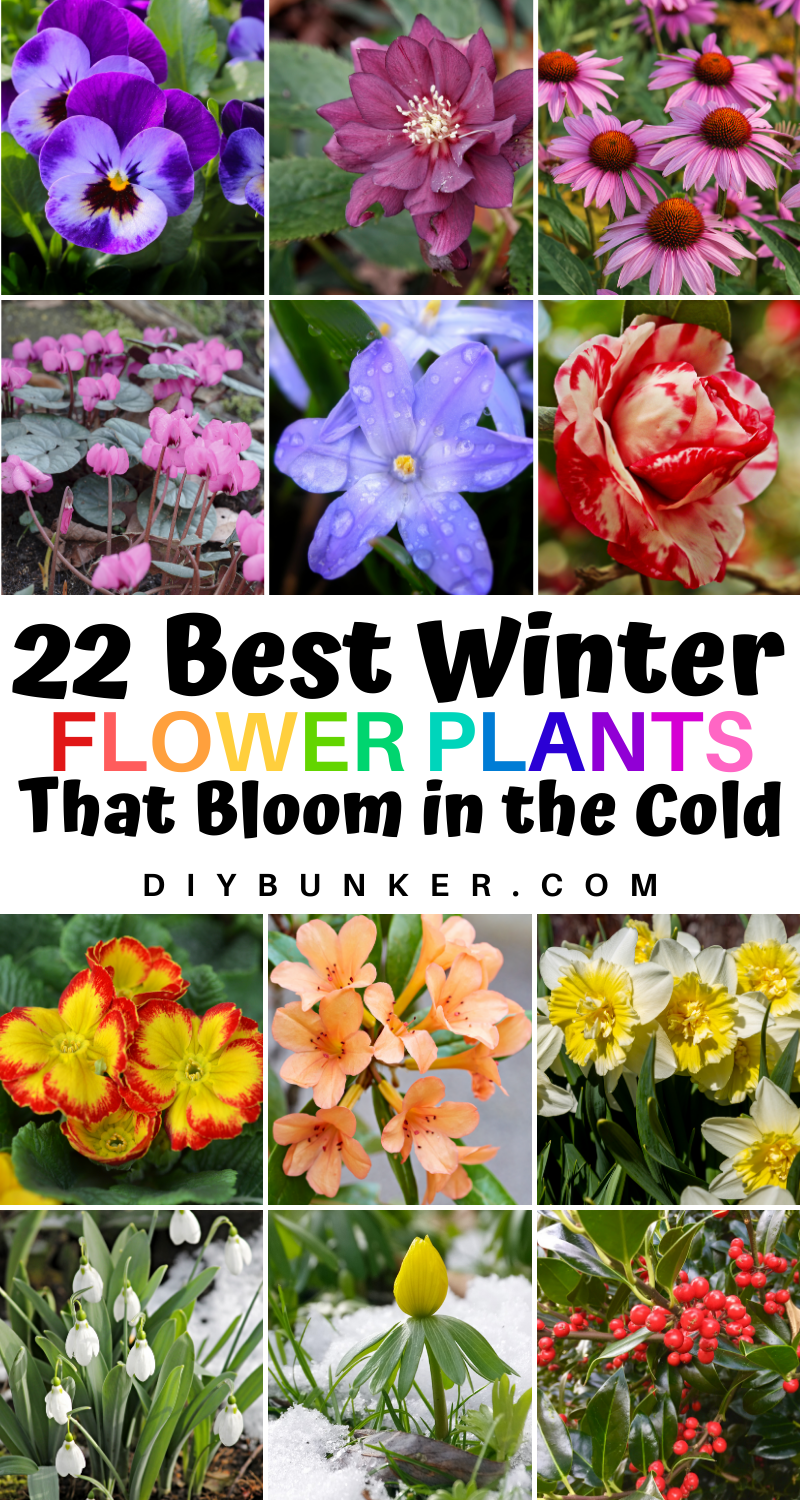 22 Beautiful Winter Flowers That Survive And Bloom In The Cold In 2021 Winter Flowers Winter Plants Winter Wedding Flowers