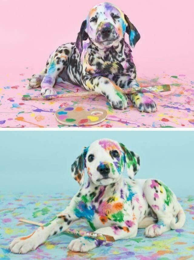 Color Dalmatas Imagenes De Animales Tiernos Memes De Animales Tiernos Imagenes De Animales