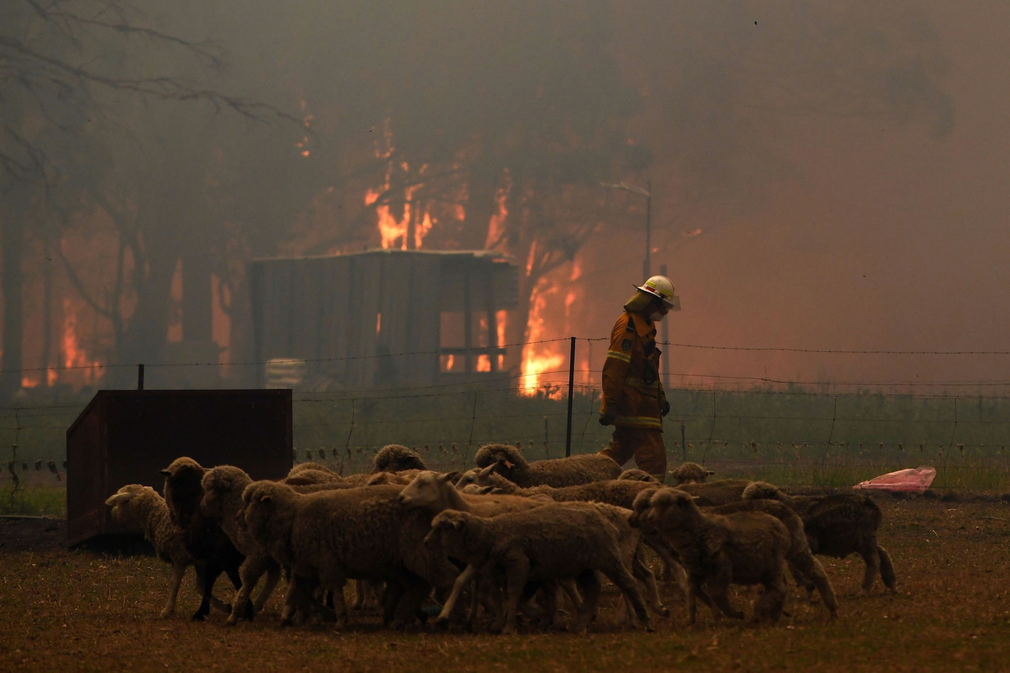 State Of Emergency The Bushfires Raging Across Australia In Pictures In 2020 Animal Rescue Australia New World