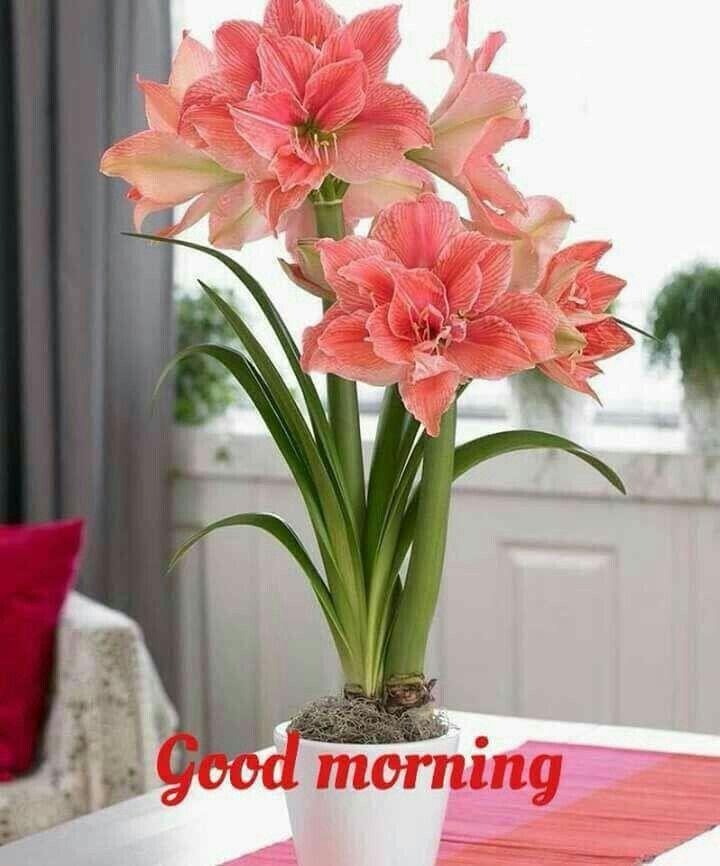 Pin By Arpita Jain On Flowers Flowers Bonsai Plants Amaryllis Bulbs