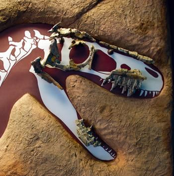"""Albuquerque, NM - New Mexico Museum of Natural History & Science offers an innovative, hands-on experience that explores NM's unique natural history. Experience its origins, dinosaurs, & ancient seacoasts. Walk through a """"live"""" volcano. Meet the 30-ton, 110-ft long Seismosaurus, the world's largest dinosaur."""