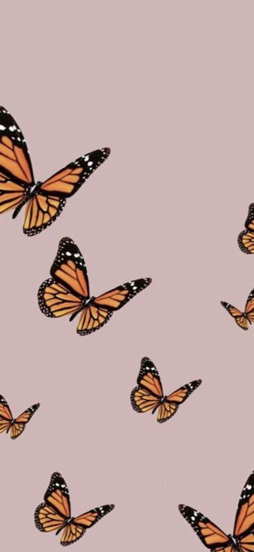 Cute Butterfly Wallpaper Butterfly Wallpaper Phone Wallpaper Pink Butterfly Wallpaper Iphone