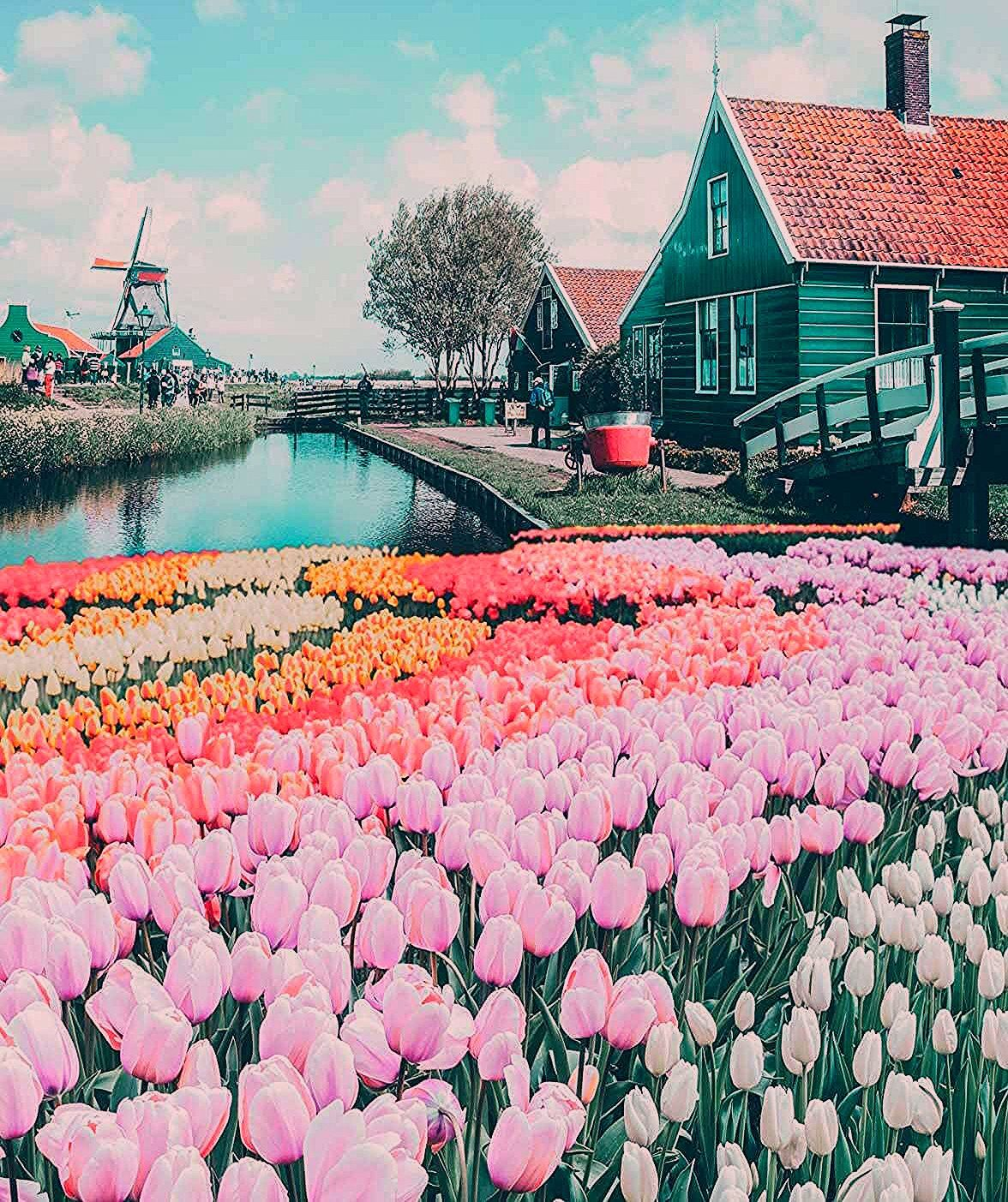 Photo of Top Things to do in the Netherlands | Avenly Lane | Beauty Reviews & Lifestyle Tips