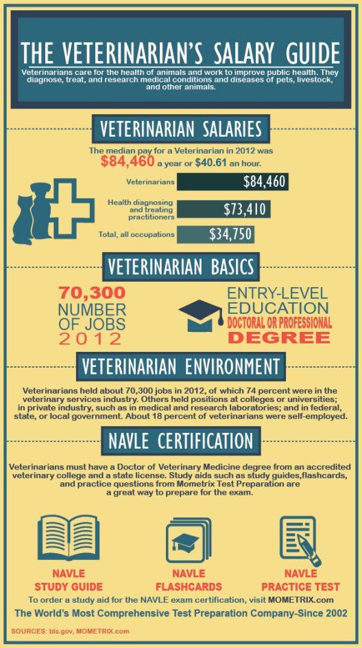 the veterinarian's salary guide | ¿my future? | pinterest ...