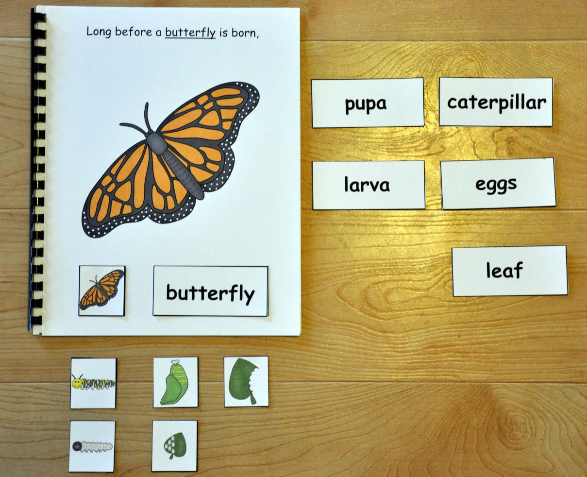 Blog File Folder Games At File Folder Heaven Printable Hands On Fun Butterfly Life Cycle Adapted Books Life Cycles [ 982 x 1209 Pixel ]