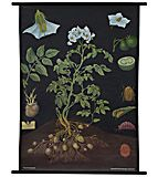 Plants of Economic Importance | The Evolution Store