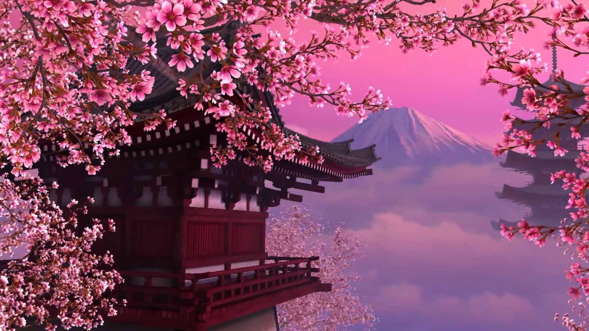 cherry blossoms theme