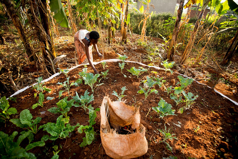 Scovia tending to her keyhole garden in Rwanda (Photo credit: Esther ...