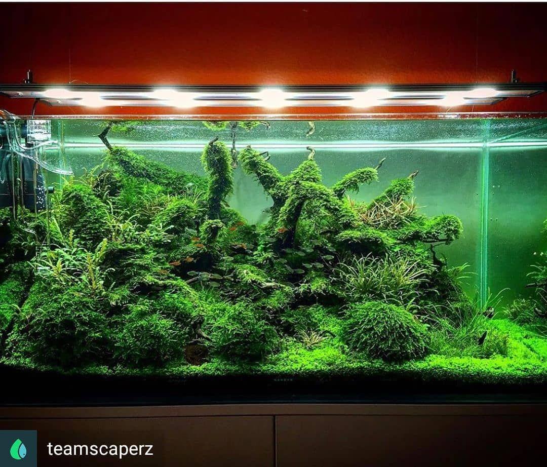 Aquarium On Instagram Reposted From Teamscaperz Was Ein Krasses Becken Ich Liebe Moos Aquascape Nature Aquarium Aquascape Aquarium