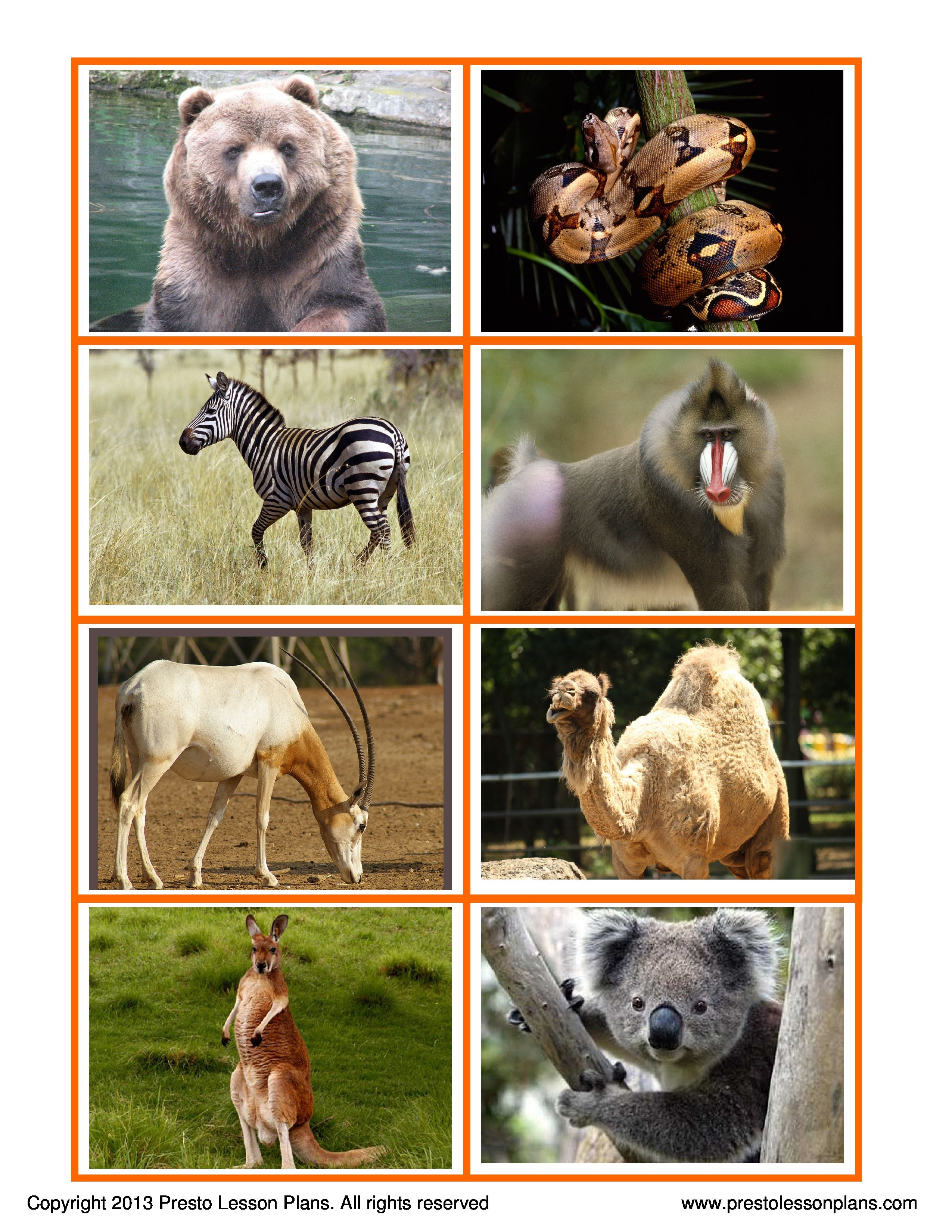 Zoo Animals Matching Game Is A Fun Activity For