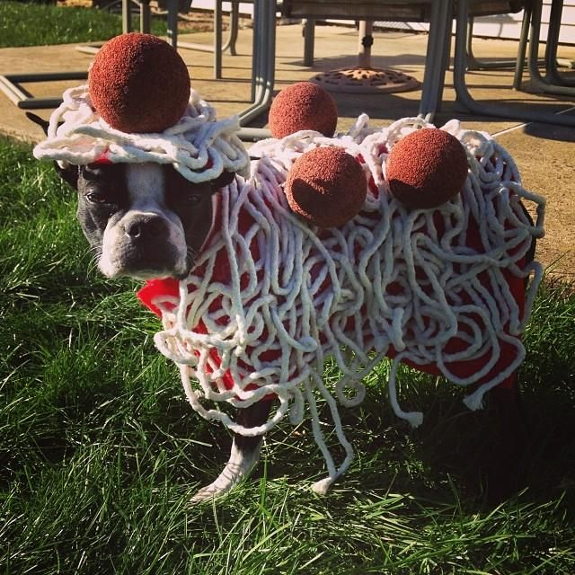Spaghetti Costume Of Louie From Levittown Usa Photo Costumes