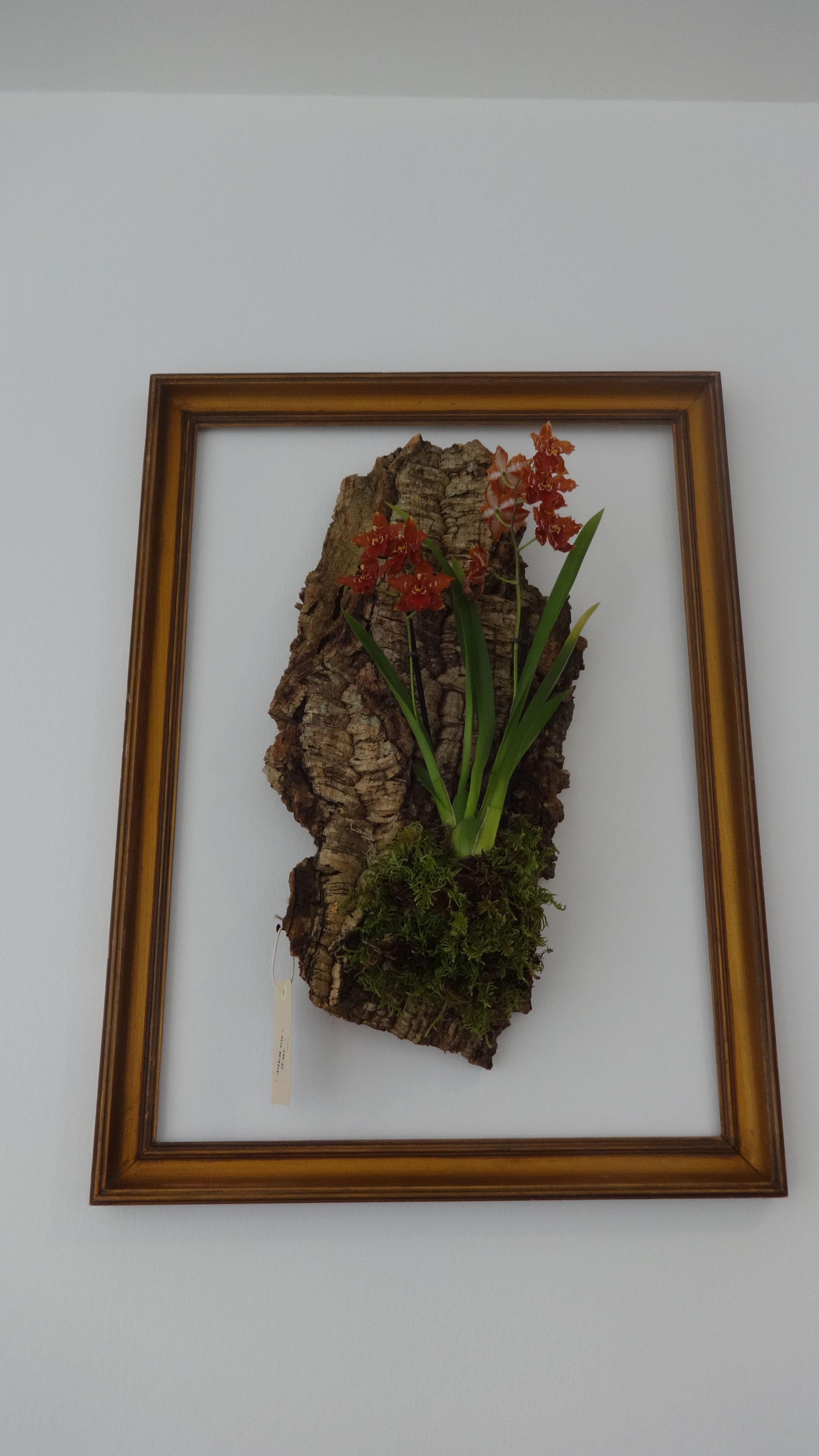Quadro com jardim vertical em cortiça, Cork, vertical garden, orchis, orquídea, plantas