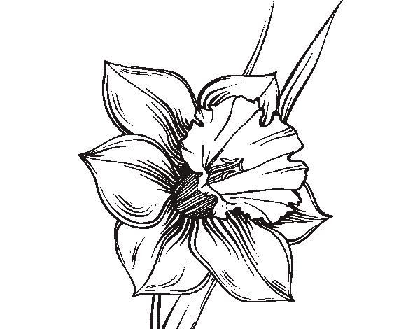 Dibujo de Flor de narciso para Colorear | DVS | Pinterest | Narcisos ...